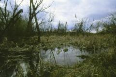 38. Isaszeg természeti környezete 2. - Isaszegi Tőzeges